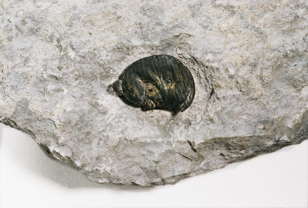 Emadus (puu, kivi) 1997