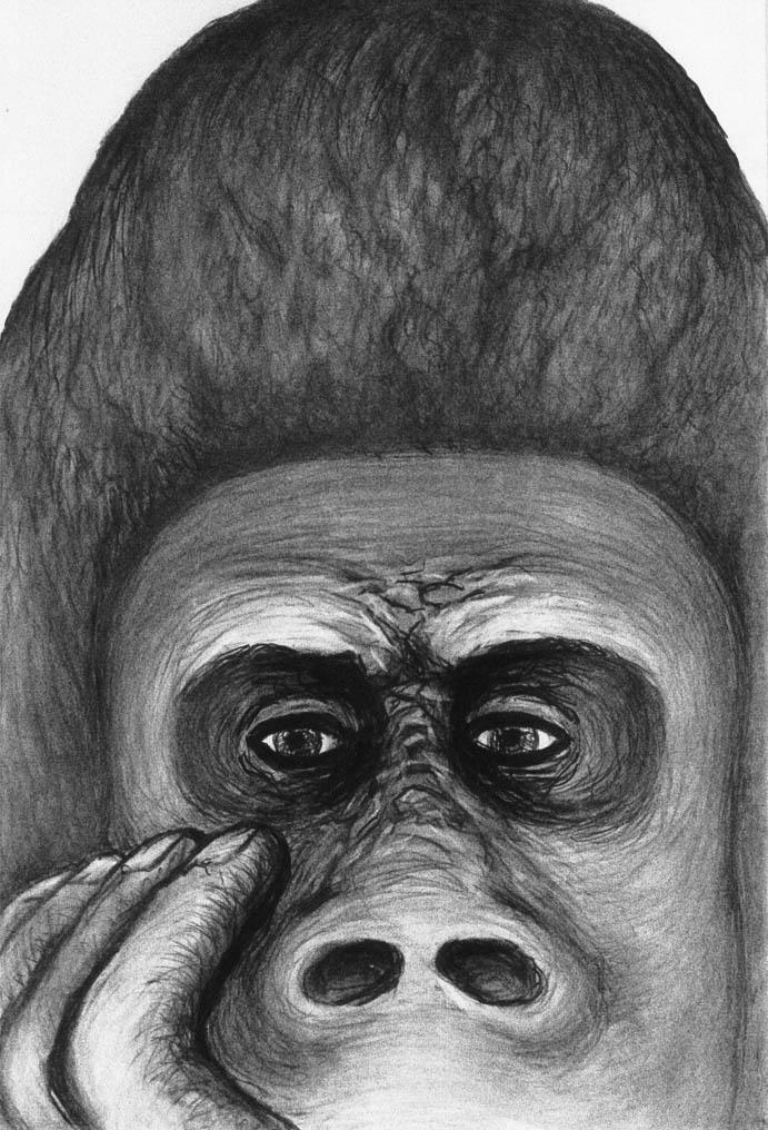 Thinking Gorilla (Charcoal)  600 x 400
